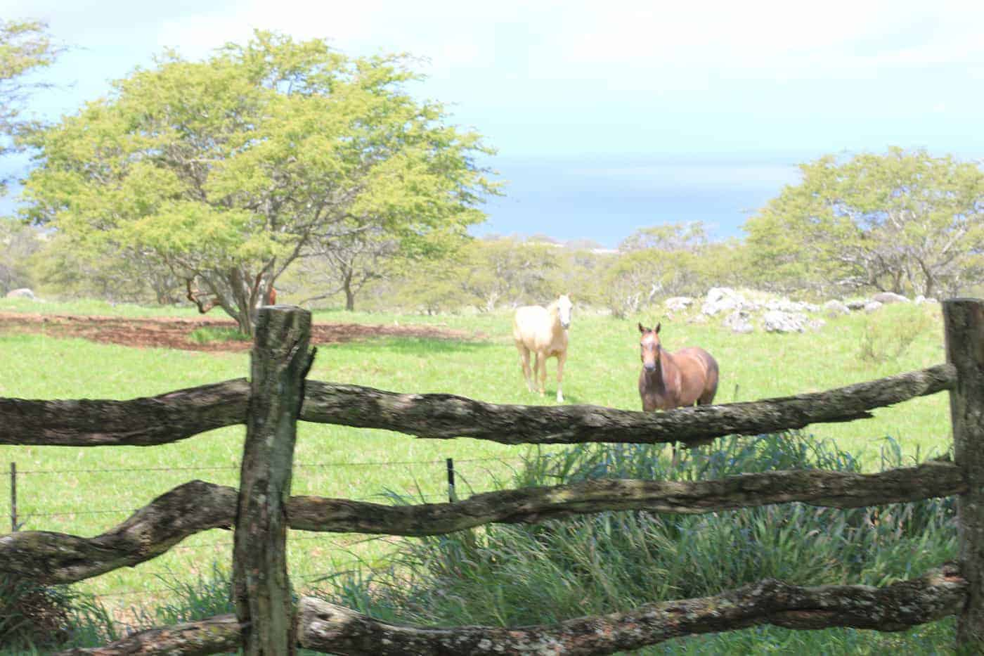 hawaii ranching