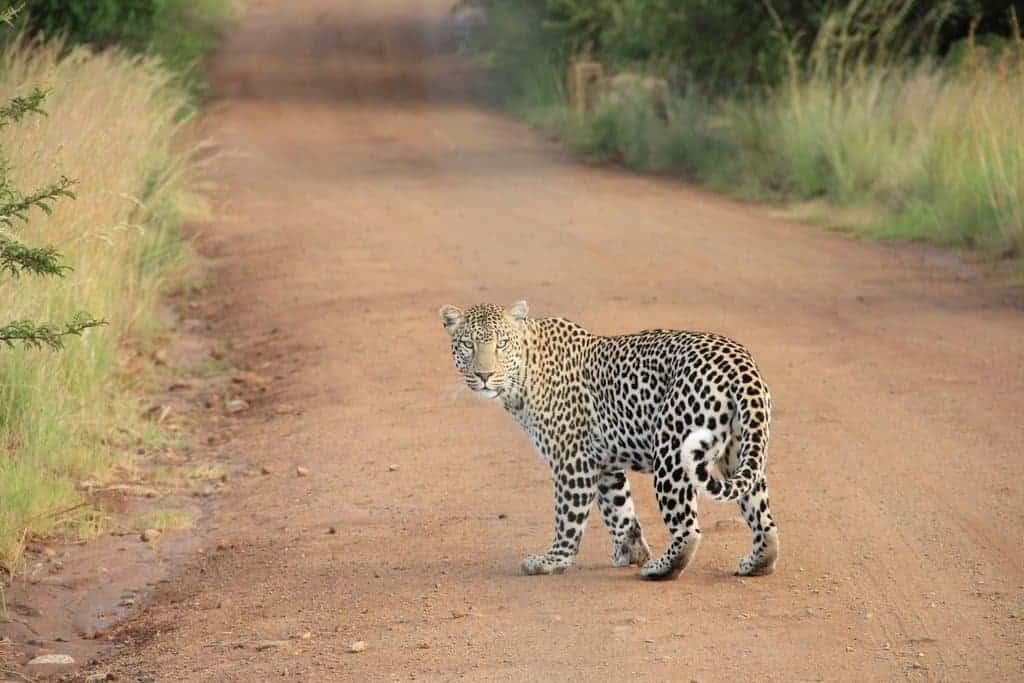 safari chic packing