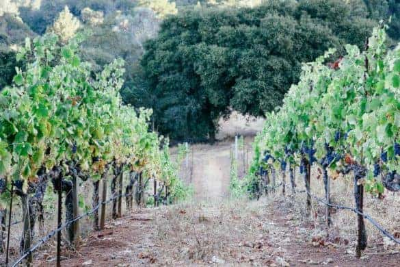 things to do in sonoma California