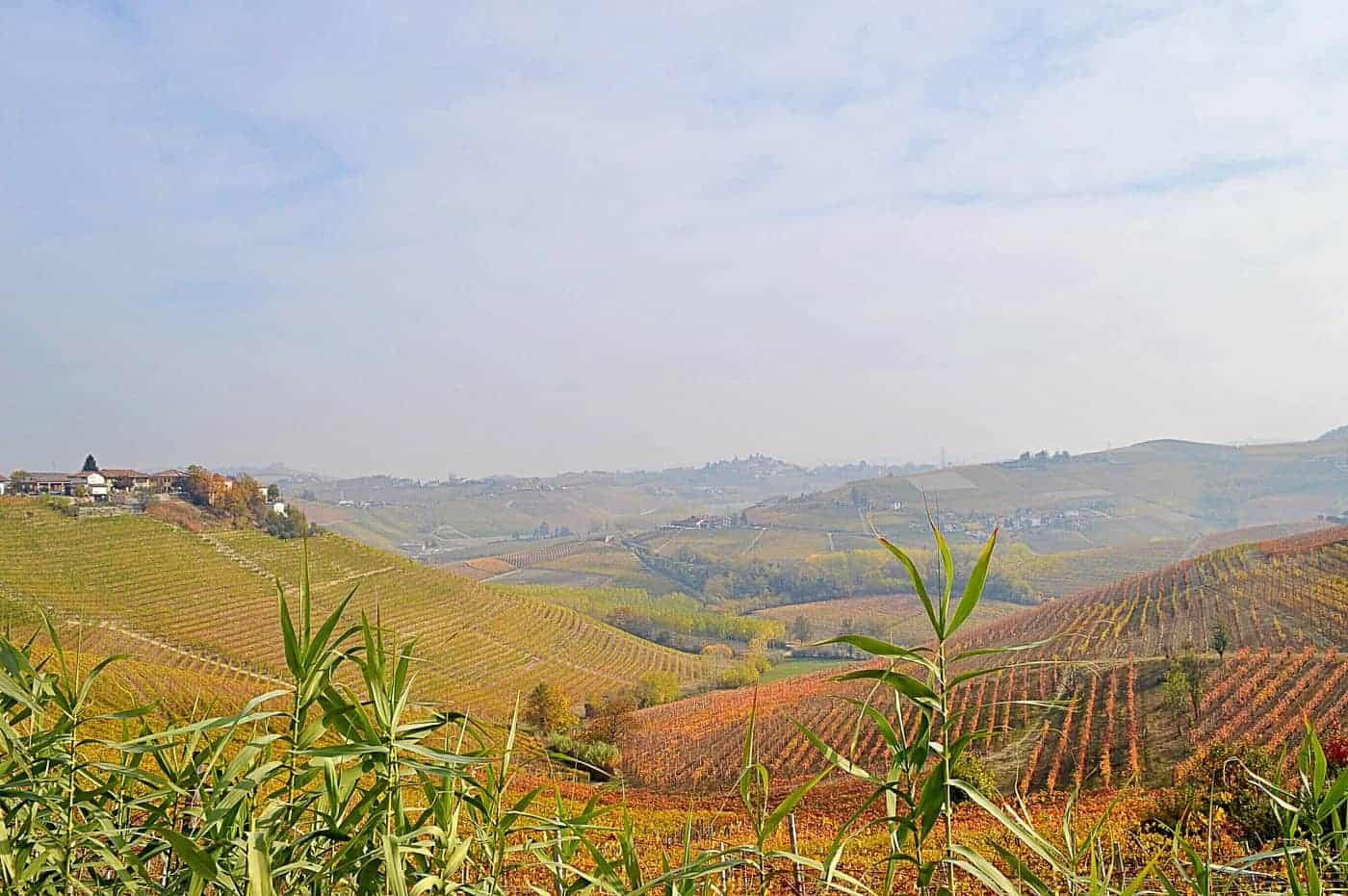 Langhe wine region in Italy