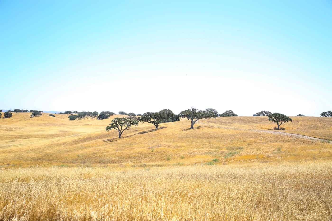 Paso Robles Itinerary Travel Guide