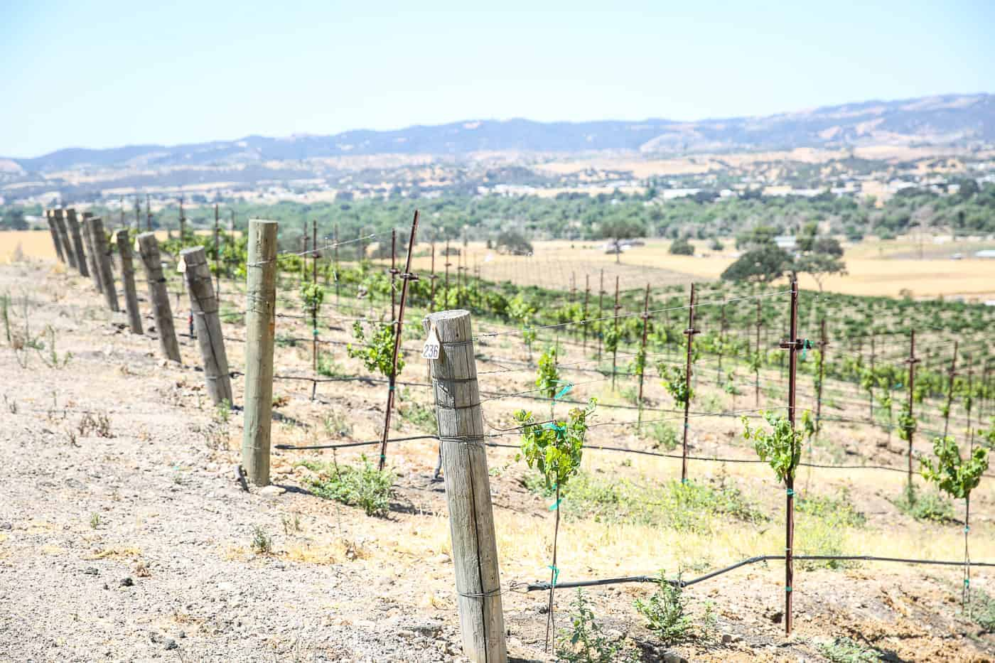 Paso Robles California Travel Guide Itinerary
